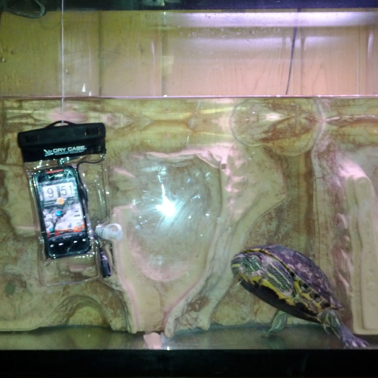 drycase_turtle